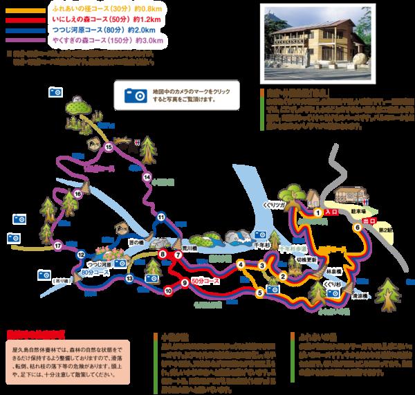 Bg_yakusugi_map